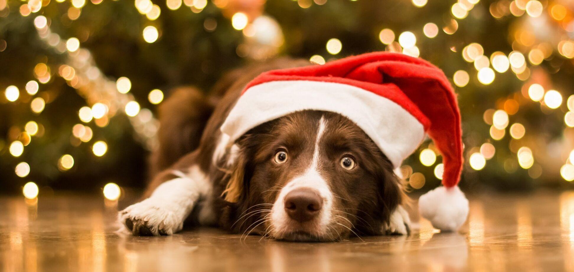 Рік Собаки і святковий стіл: маг уточнив важливі деталі