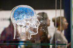 Ученые назвали действенный способ улучшить память