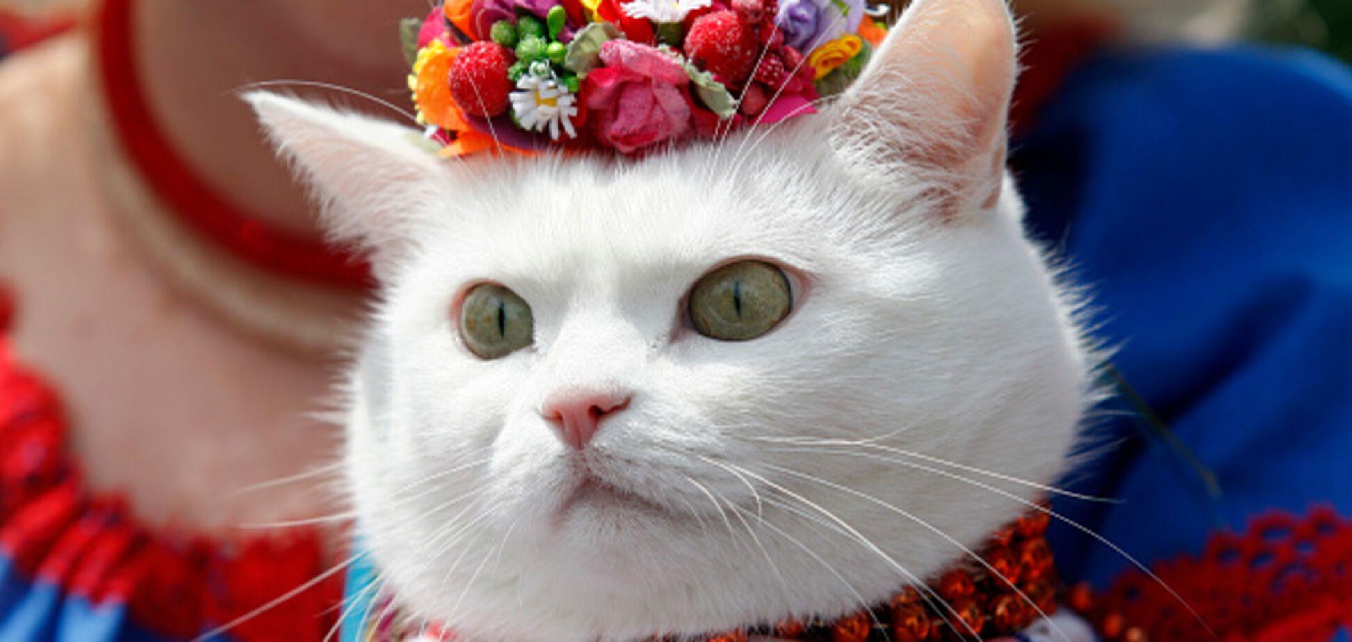 'Будет защищать от русокрыс': МИД Украины взял на работу кота