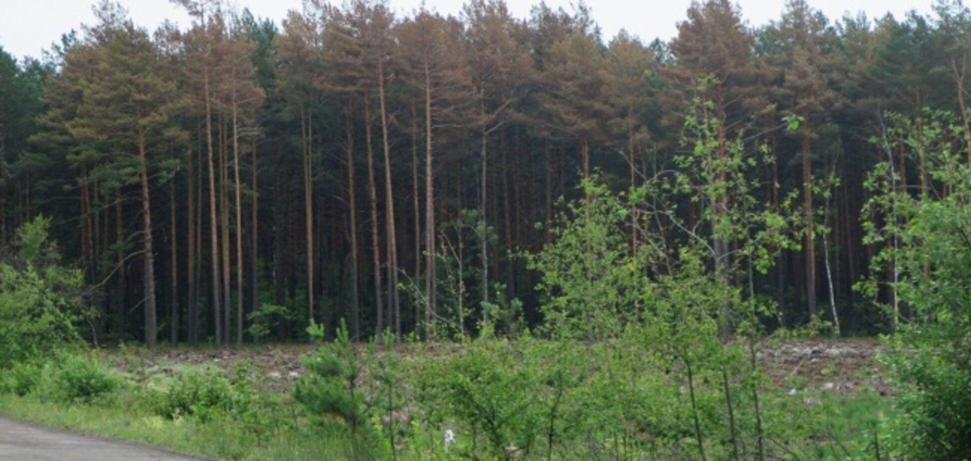 На Ривненщине люди в балаклавах с битами напали на лесную охрану