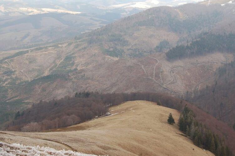 Вырубка леса-кругляка в украинских Карпатах - Цензор.НЕТ 4567
