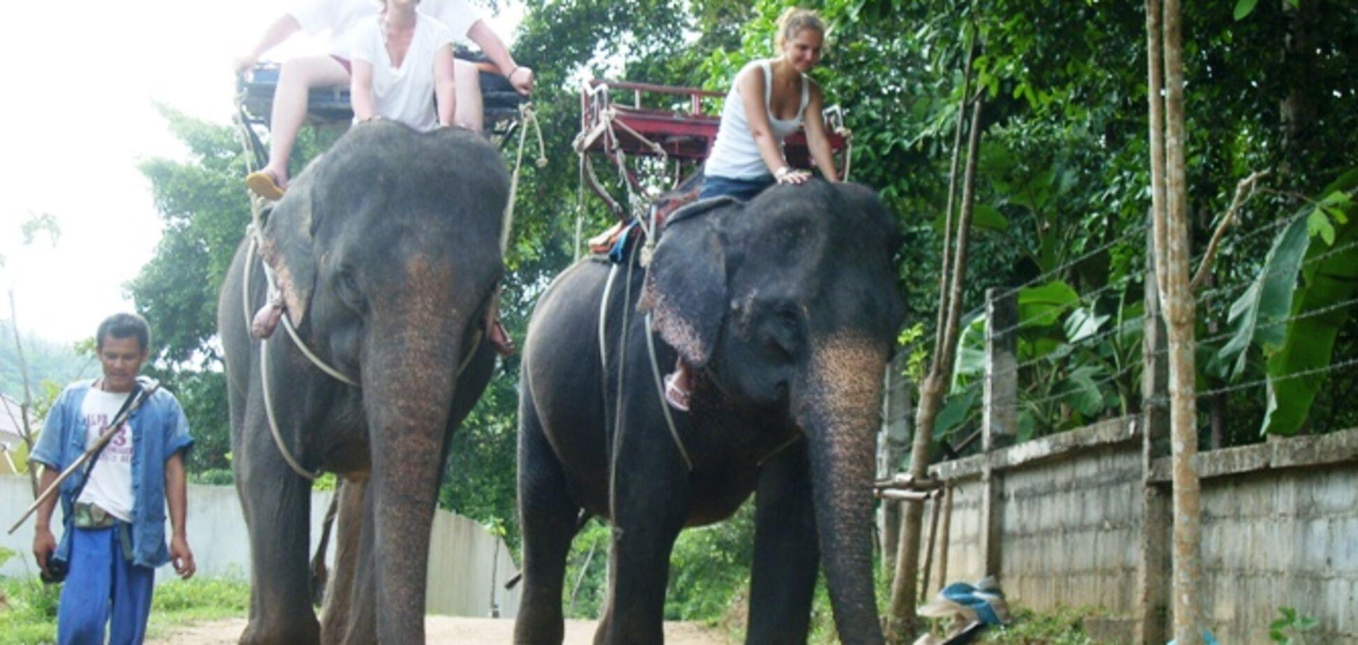 слон, туристы
