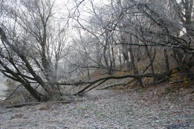 В Броварском лесу под Киевом нашли труп молодой девушки
