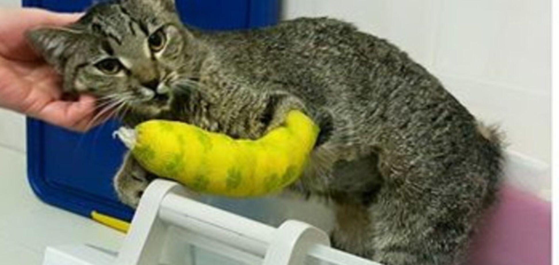 Выжившая на Позняках кошка