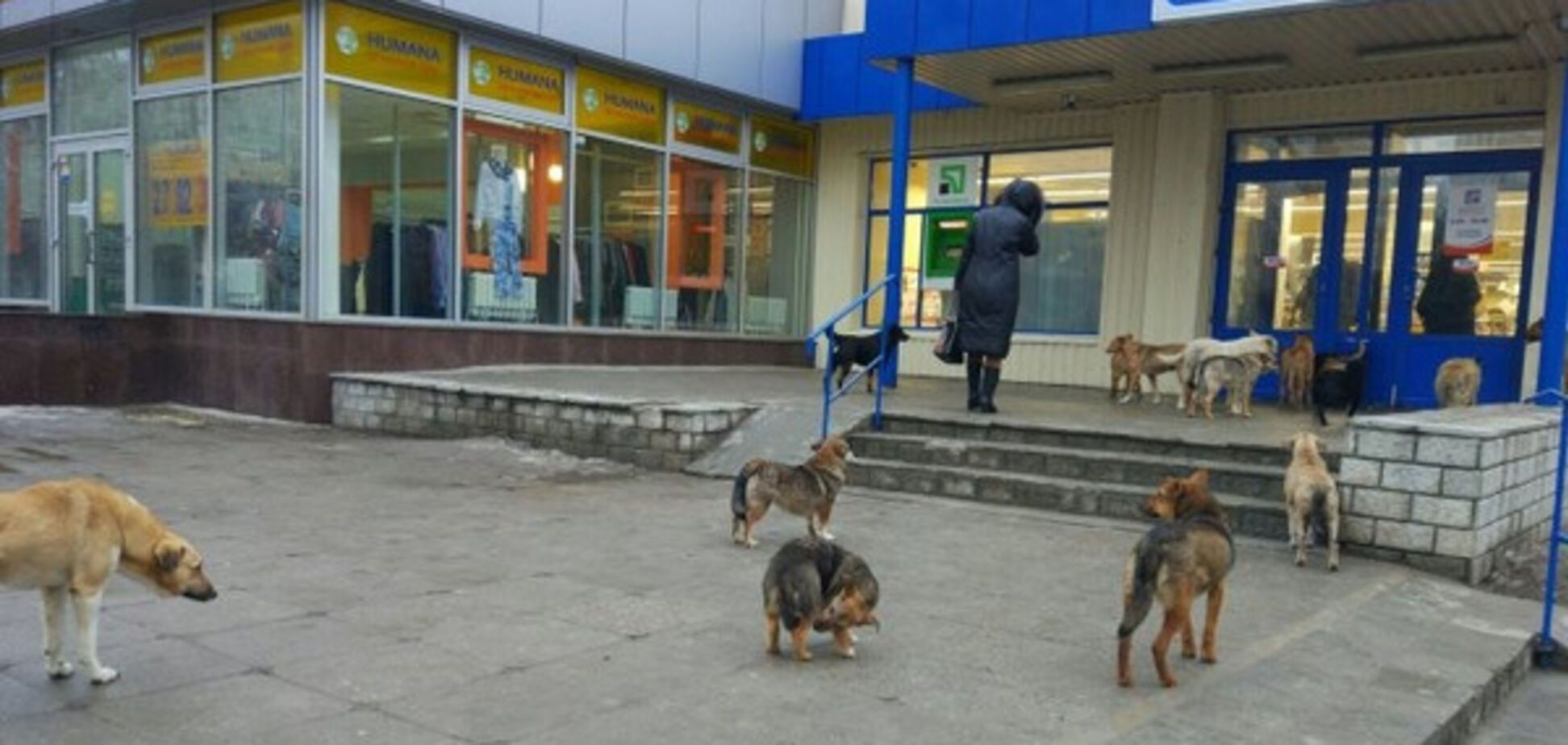 В Запорожье бездомный водит в супермаркет стаю собак (ФОТО)