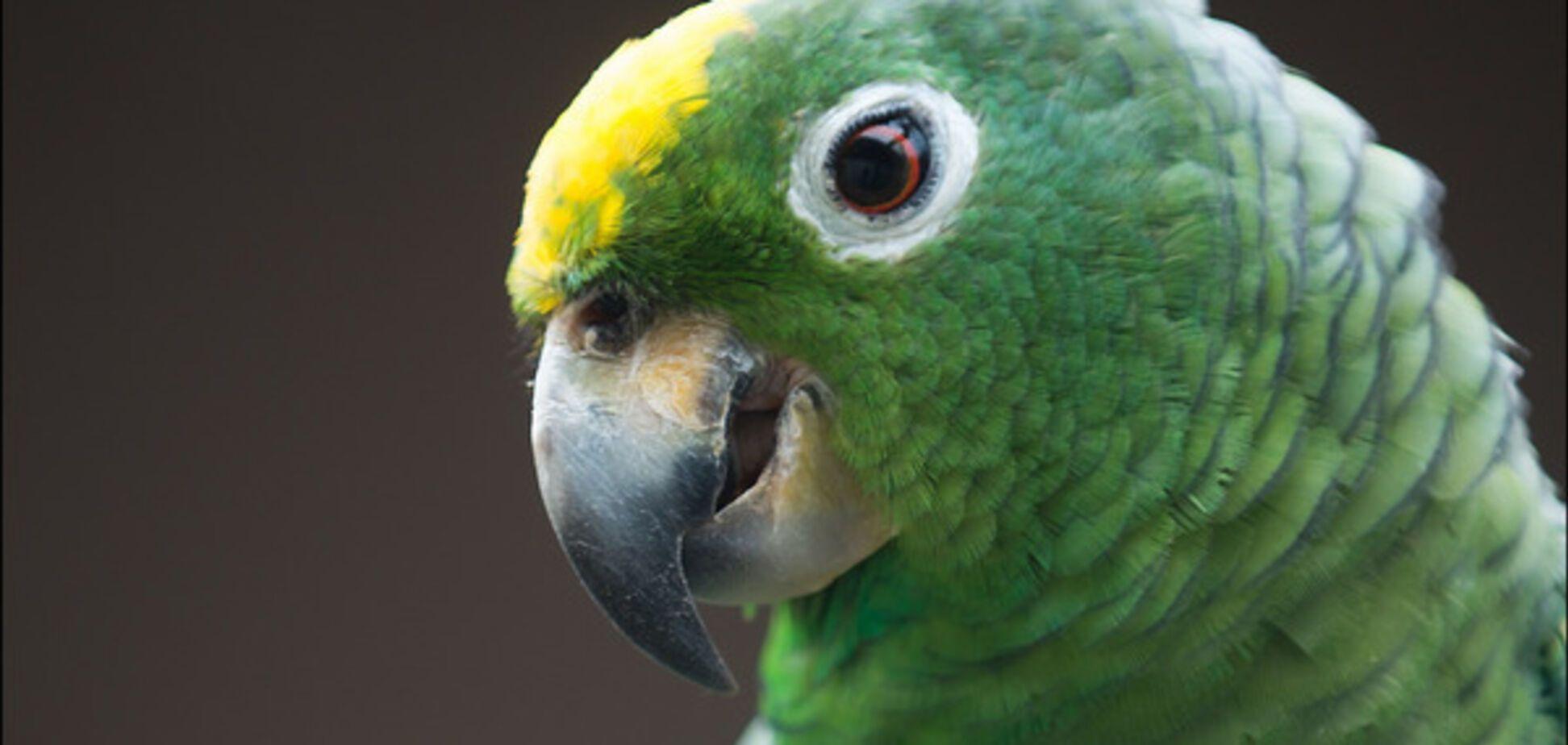 зелений папуга