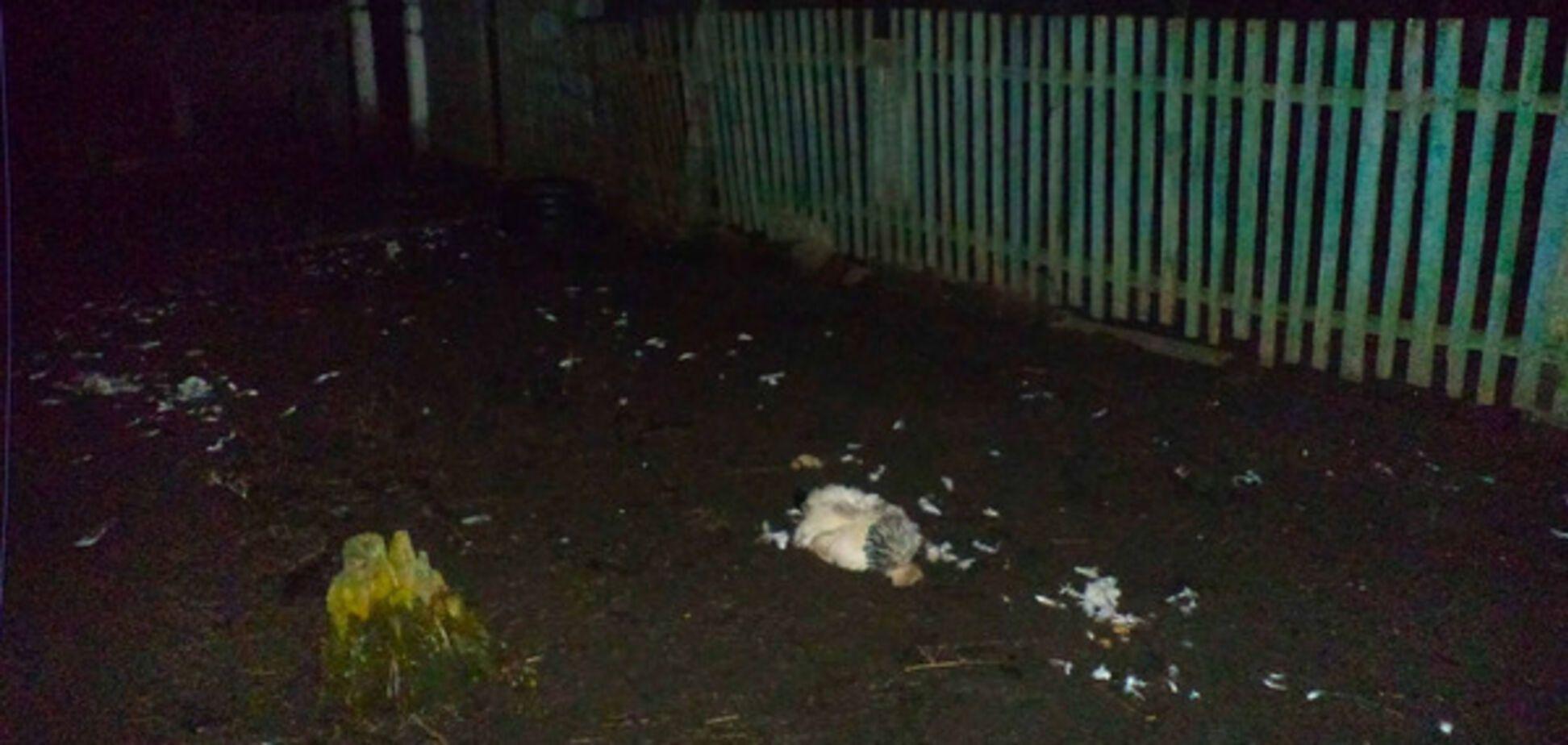 В области частное домовладение атаковала стая волков (ФОТО)