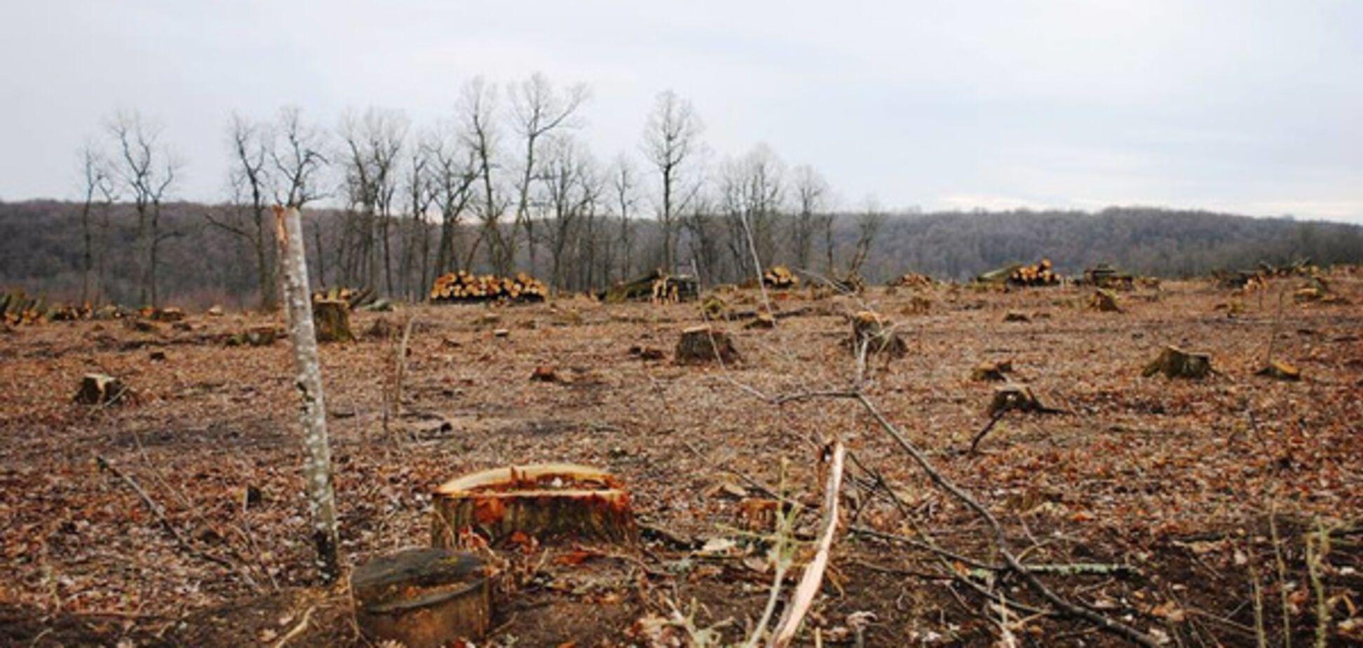 'Дикие туземцы': министра ткнули носом в варварскую вырубку леса для ЕС