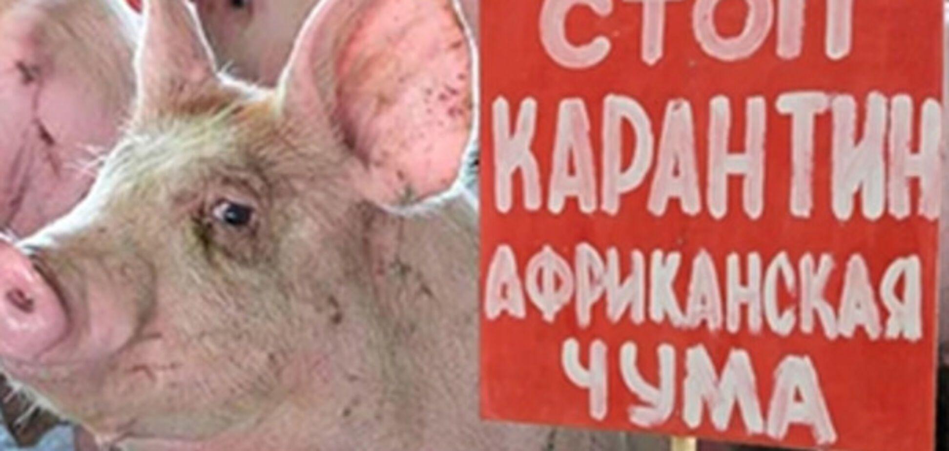 Просто свинство: в Запорожской области вновь зафиксирован вирус АЧС