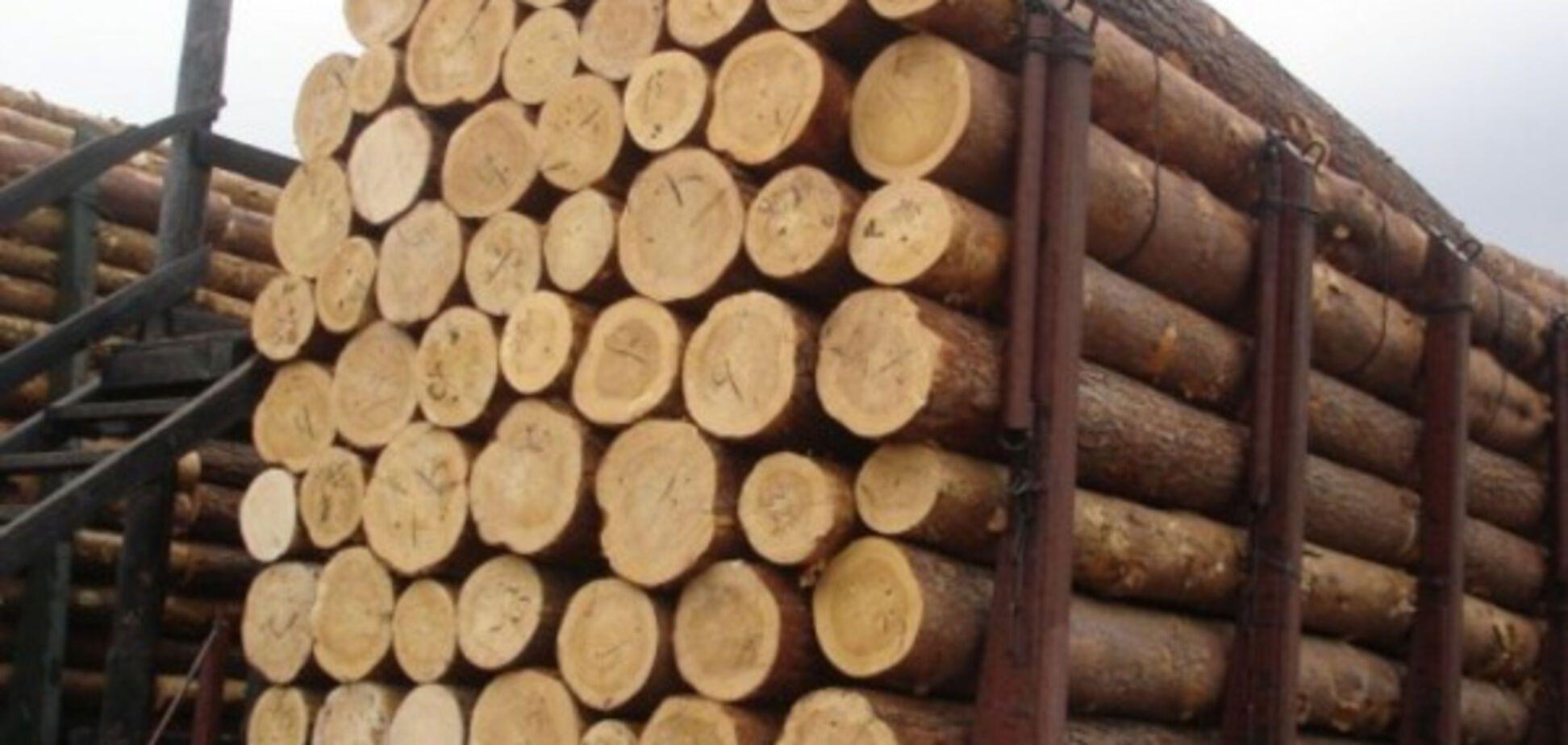 Мораторий на экспорт леса