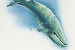 'Синий кит': британцы забили тревогу