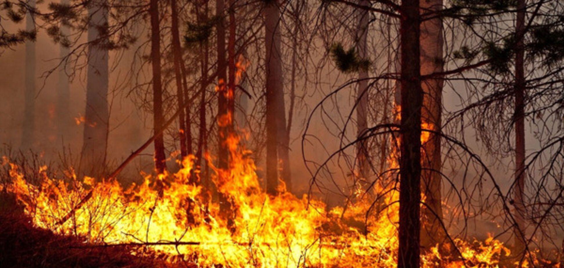 Начался сезон пожаров: за выходные в области - 30 случаев возгорания