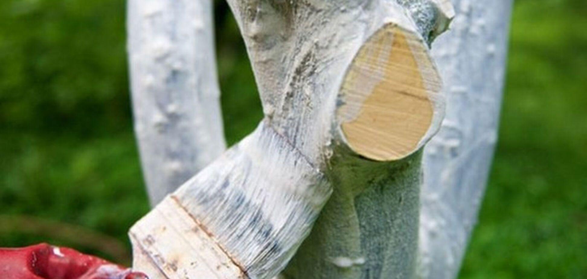 У Києві заборонили білити дерева і бордюри