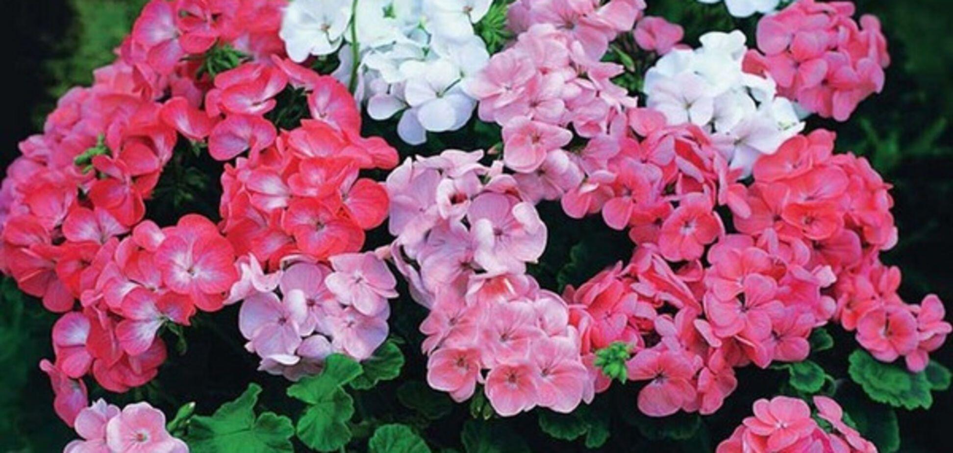 Свойства комнатных растений: выбираем собственного 'помощника'