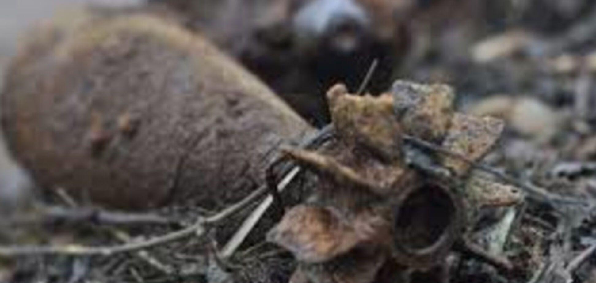 В Запорожье обнаружены опасные объекты времен Второй мировой