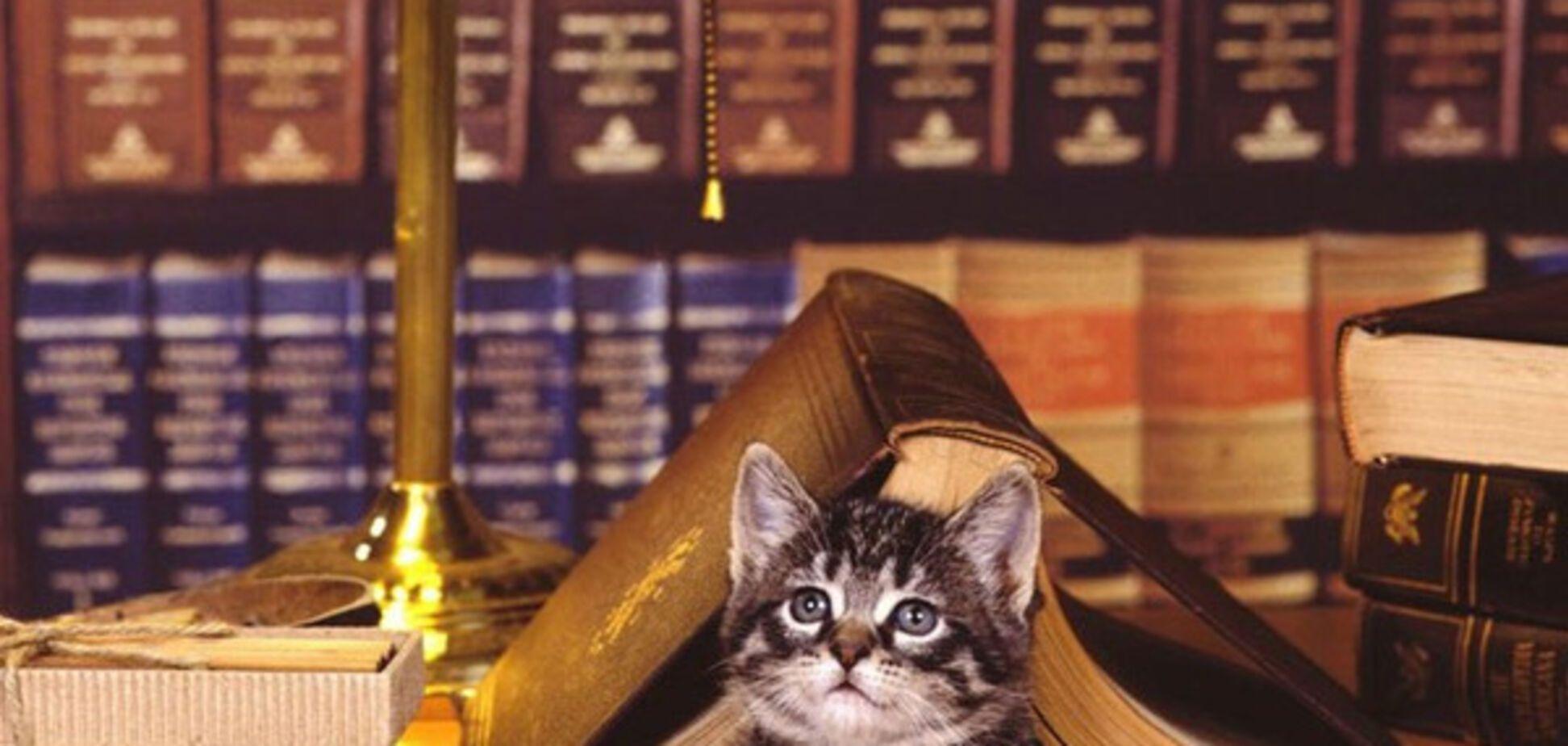 книги, кот