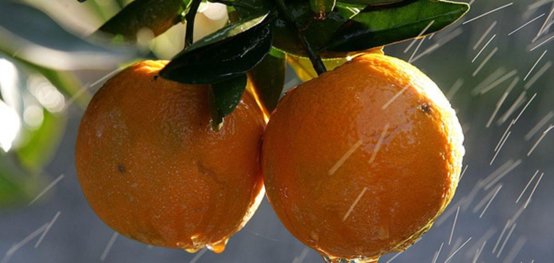 Ученые назвали фрукт, который может защитить от маразма
