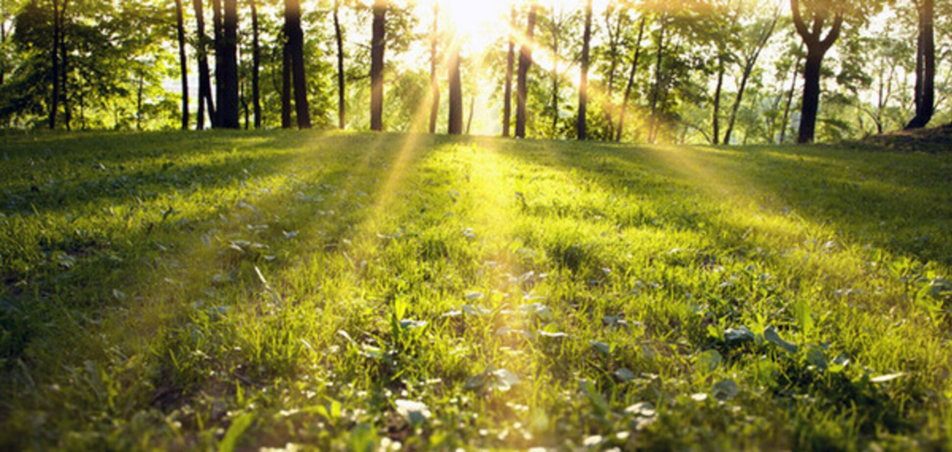 лес солнце трава