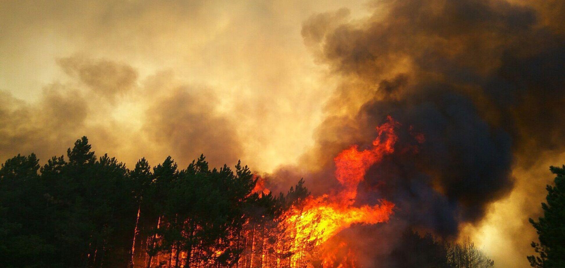 Выгорело 80 га леса: стало известно о жутком ЧП в Николаевской области