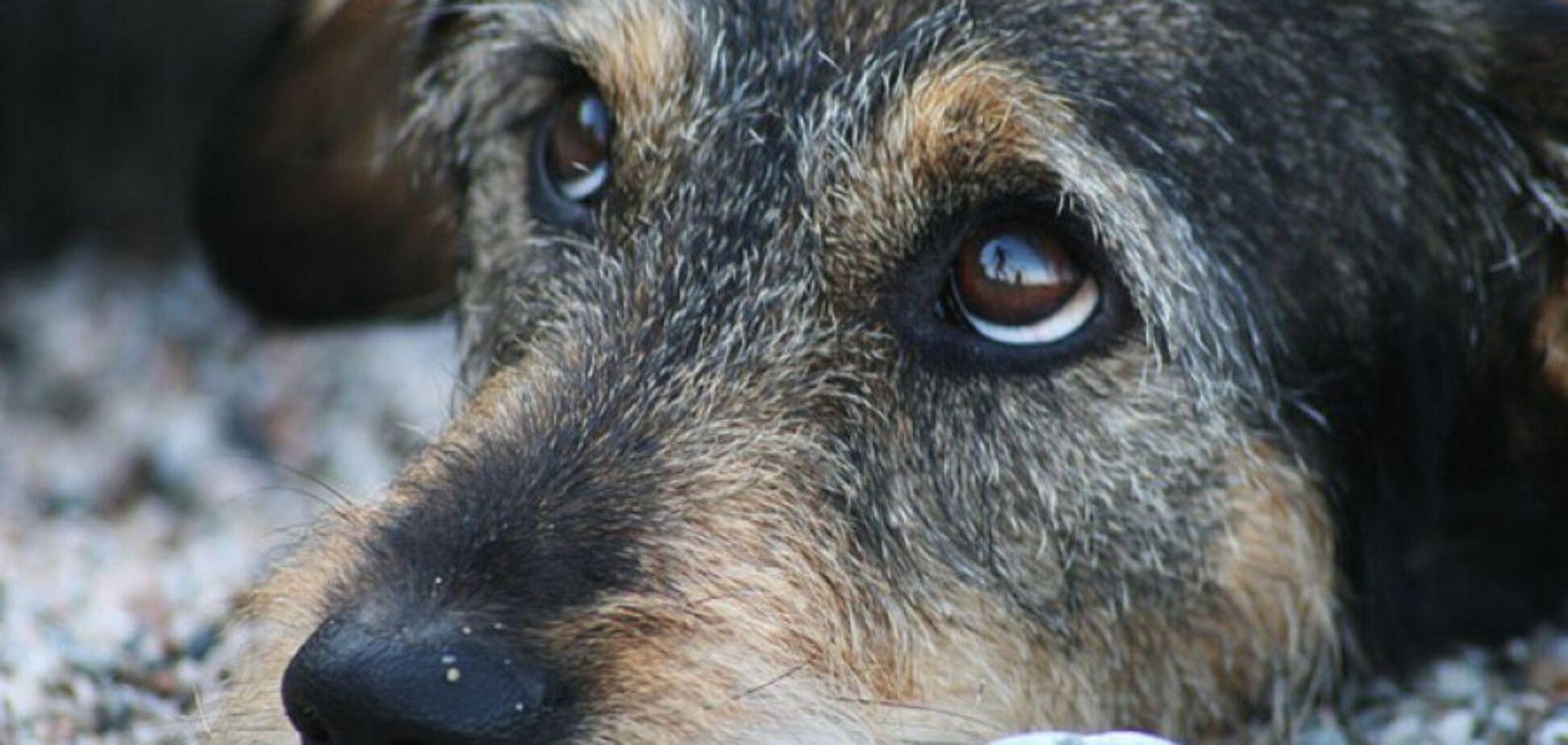 Убийство собаки в Харькове