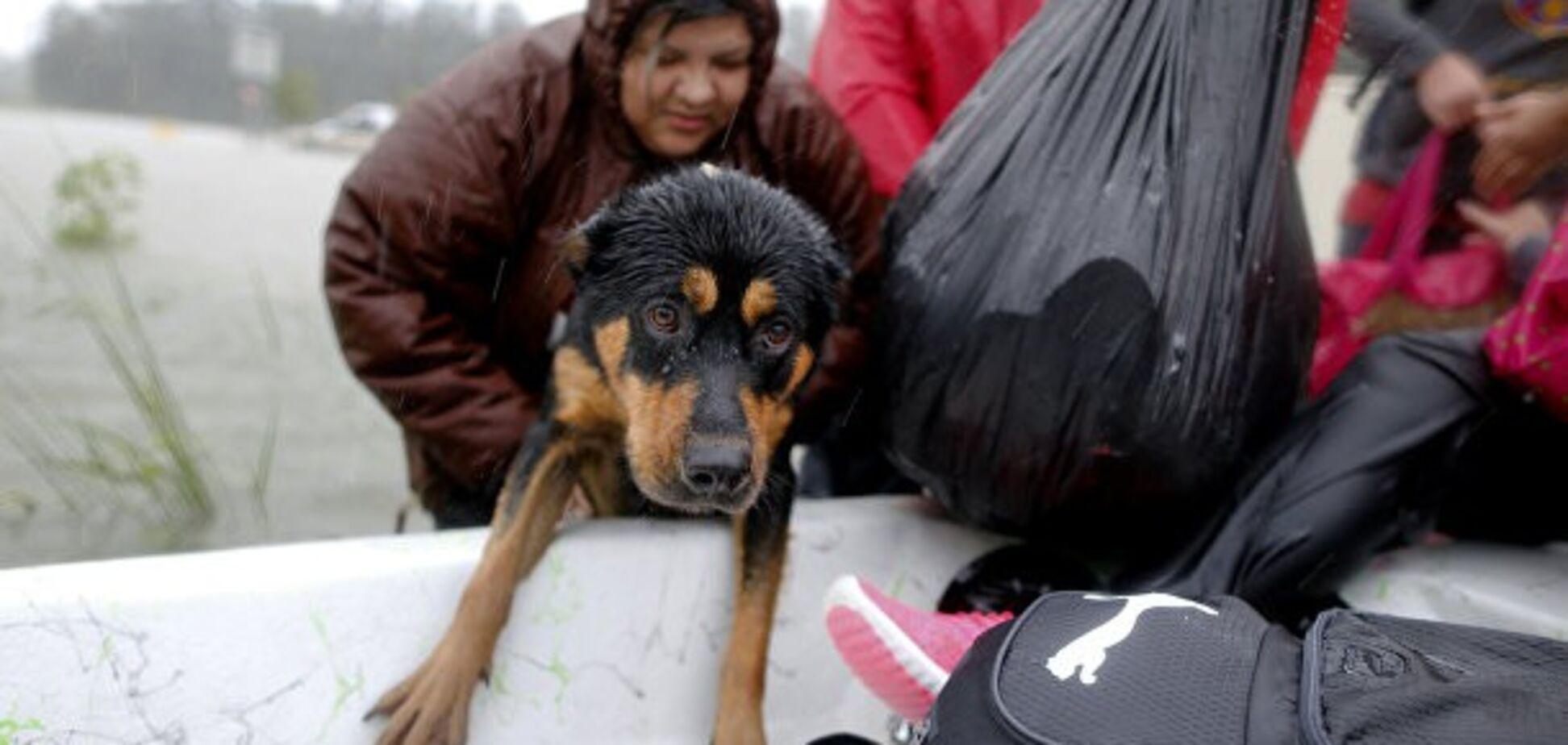Подвиг заради домашніх вихованців: як американці рятують тварин від урагану 'Харві'