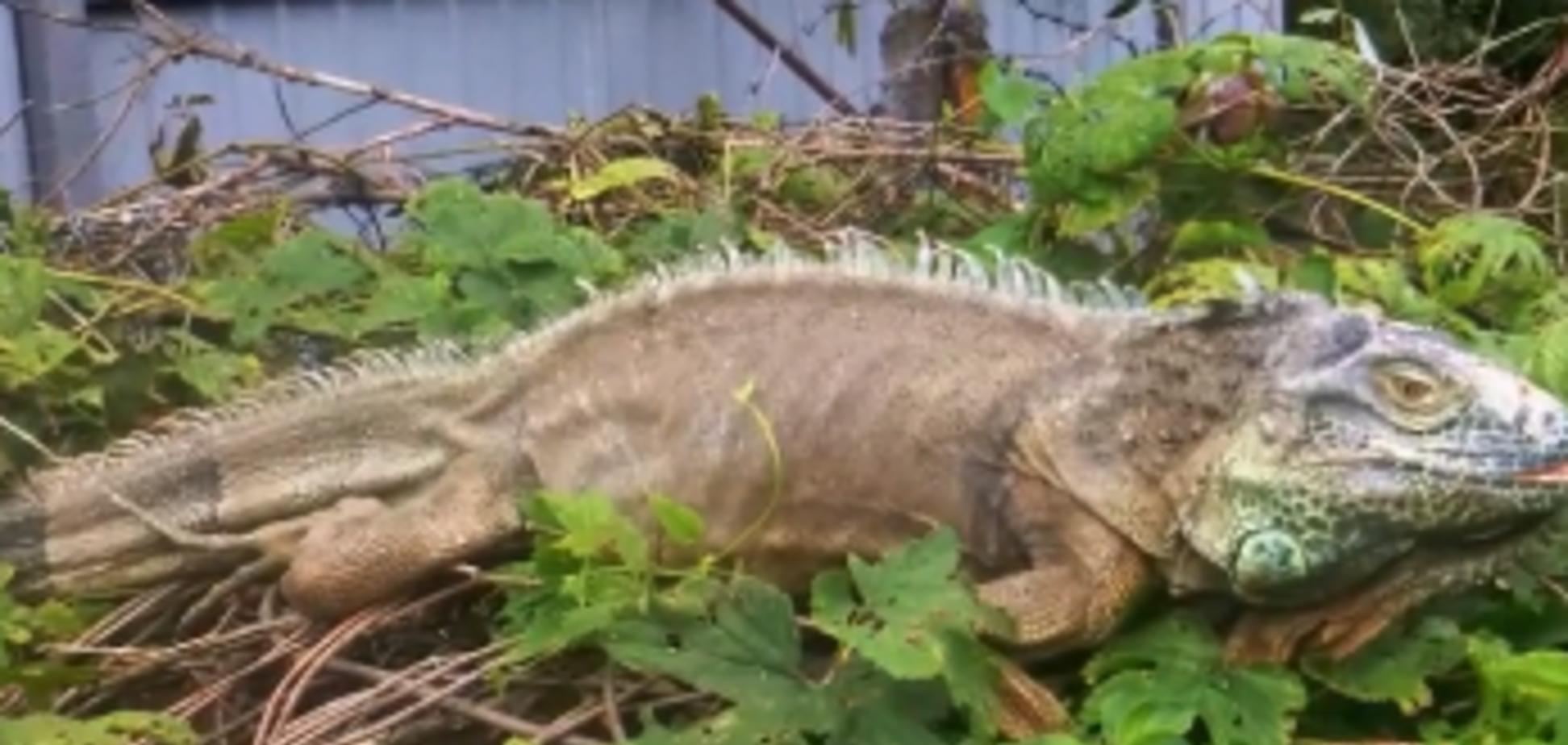 Охота на 'динозавра': под Киевом переполошились из-за необычного зверя