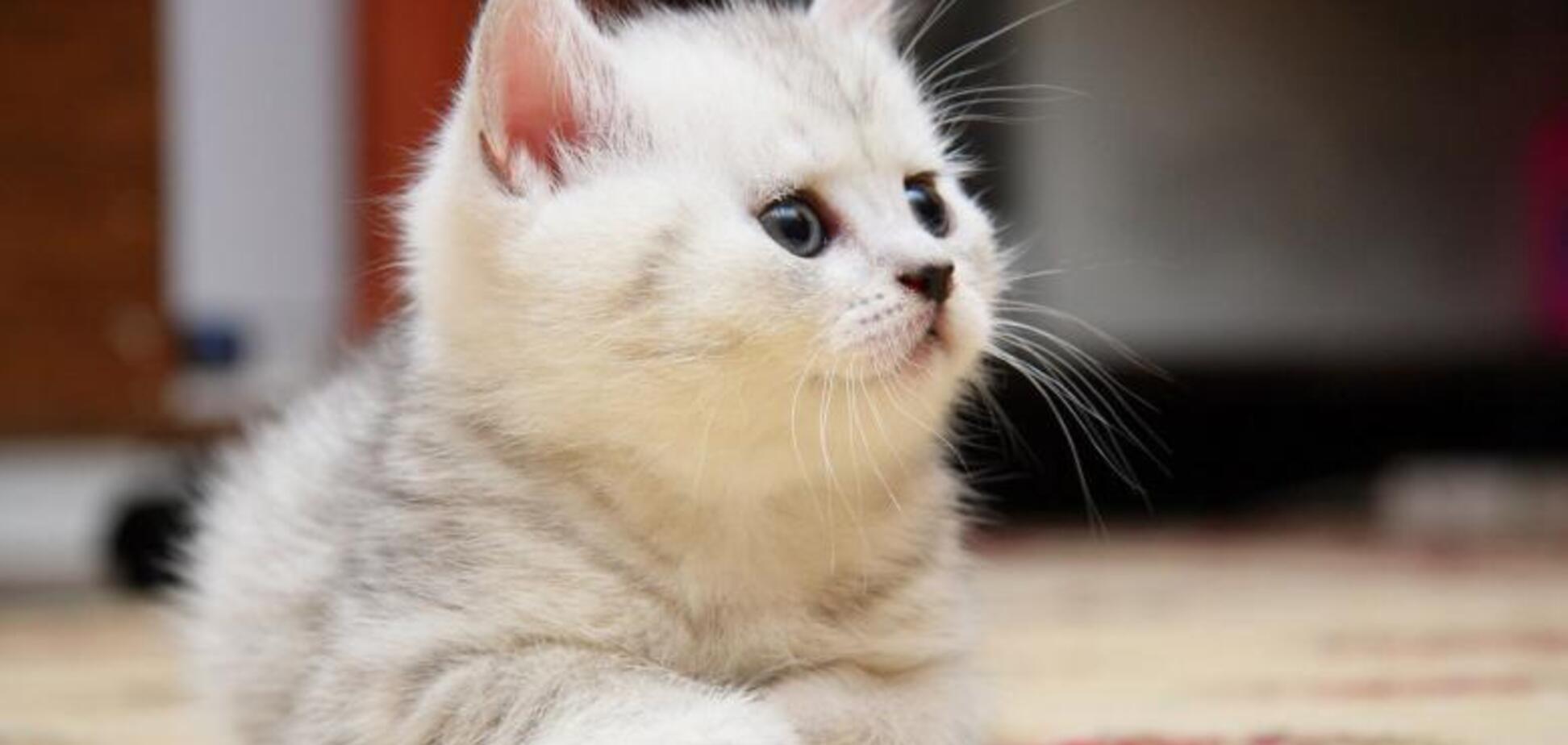 День кішок