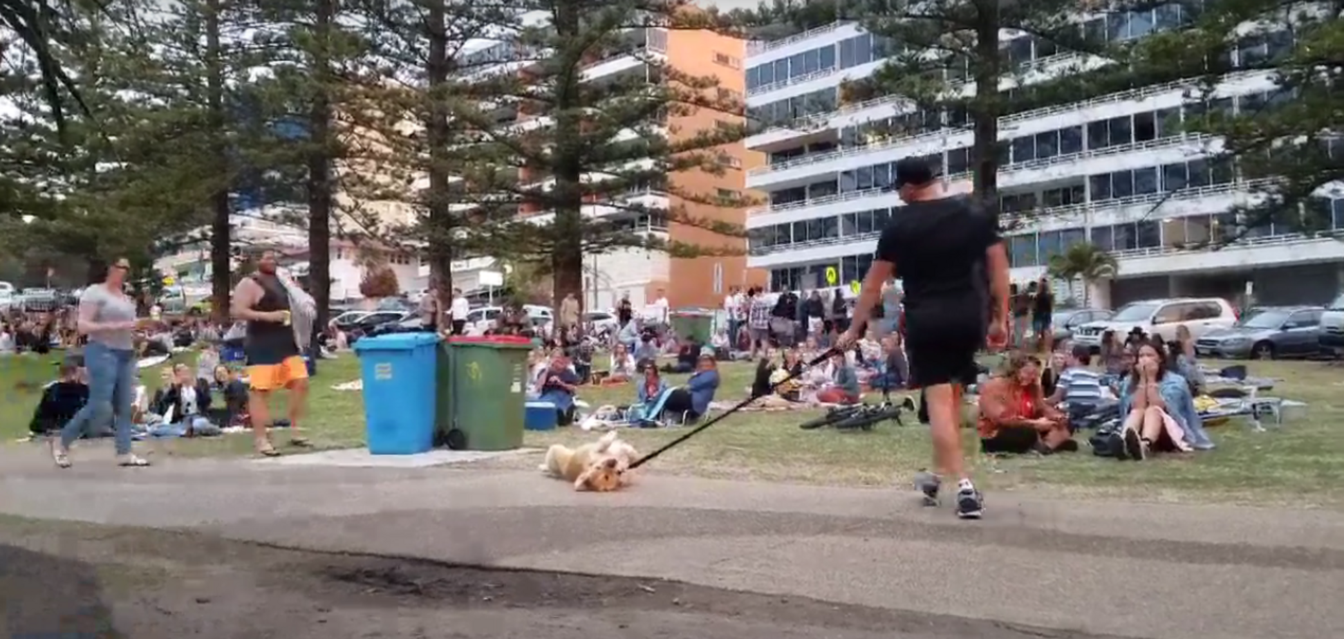 Ленивый пес занял позу 'умри' и стал звездой сети: уморительное видео