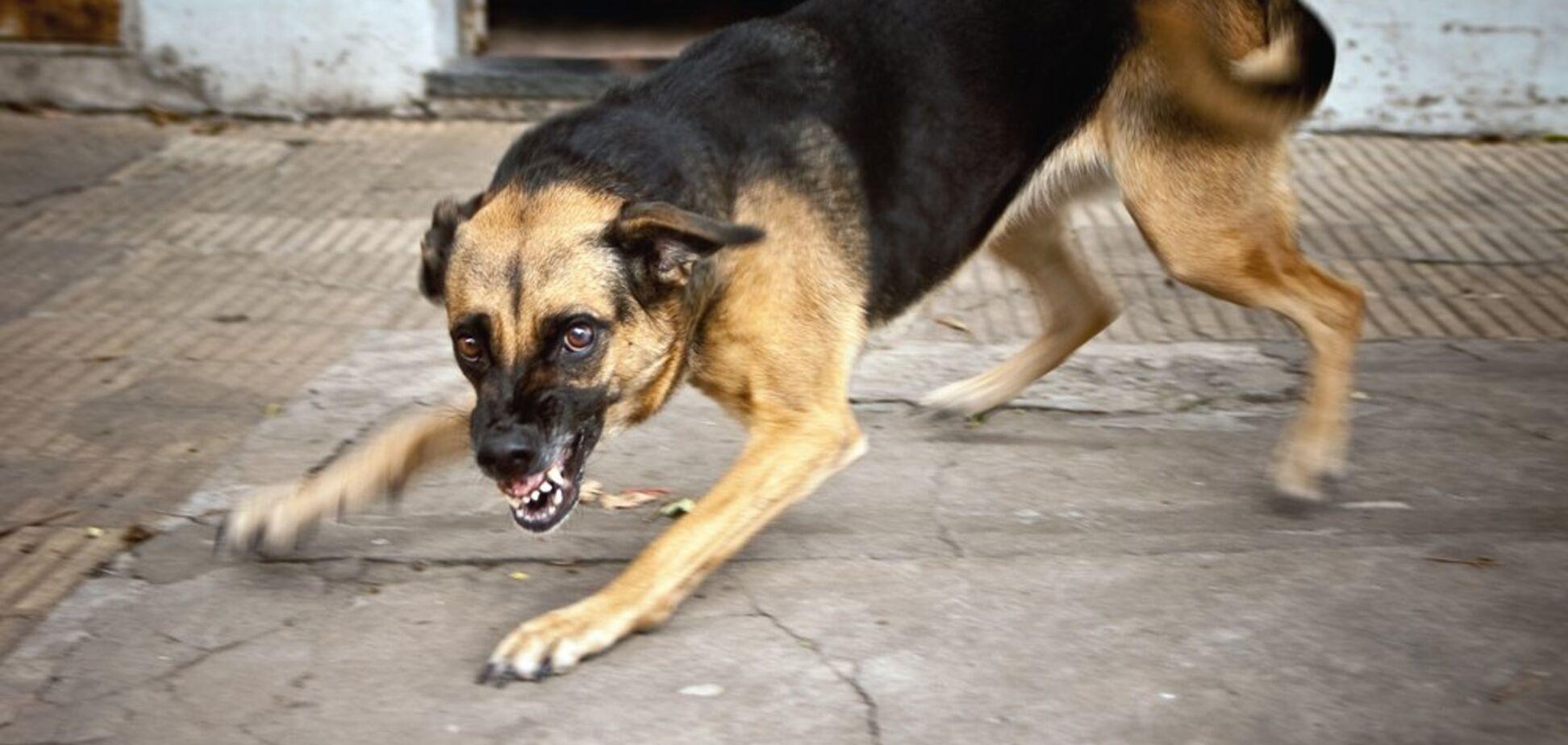 Прирекли на смерть у муках: Журналістка, яку вкусив собака, шокувала 'лікуванням'
