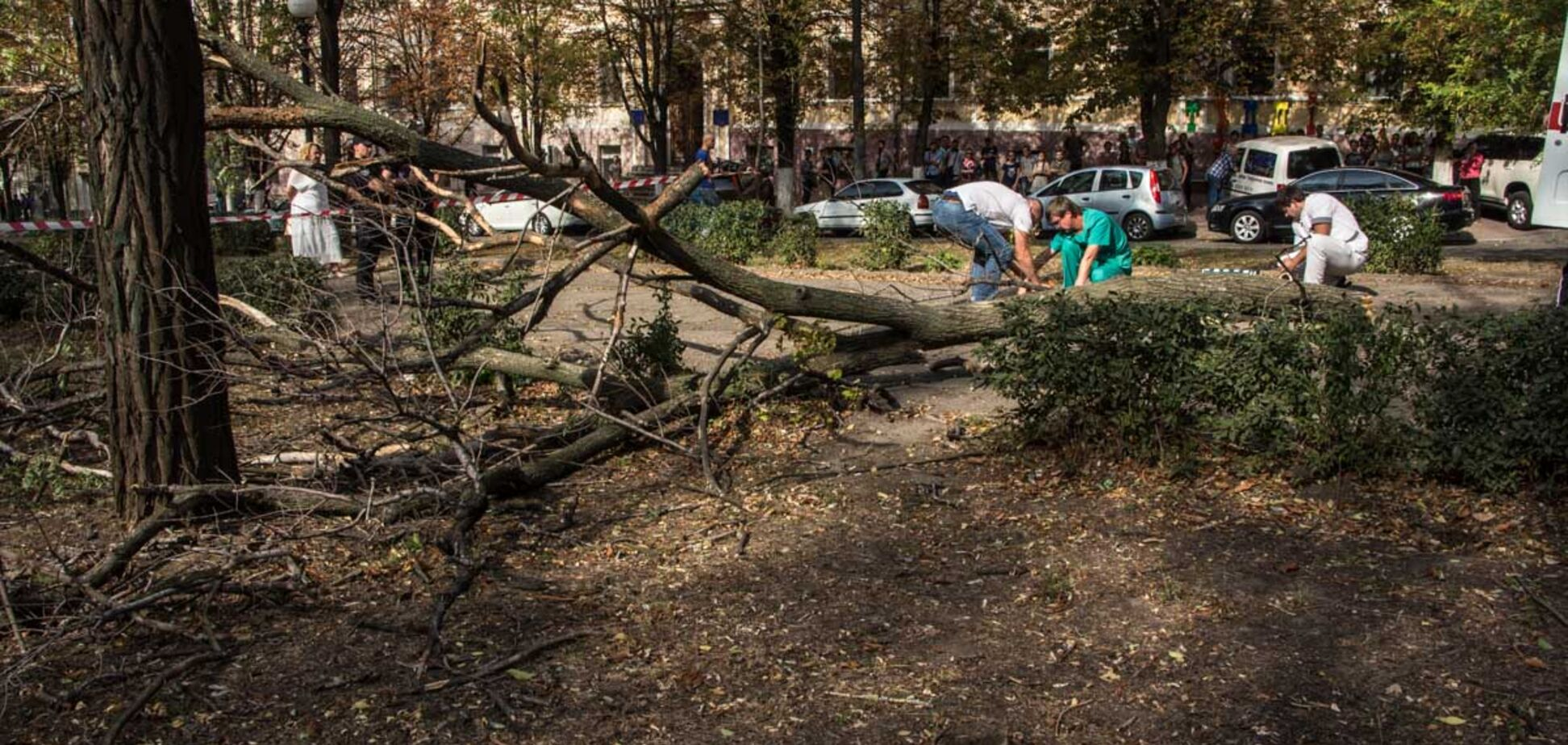 Пробито легкое и сломан позвоночник: в Днепре дерево убило беременную девушку