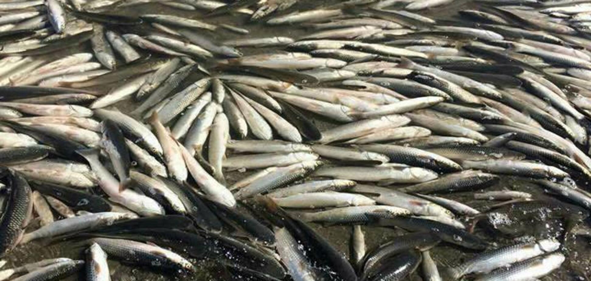 В Запорожской области на берег выбросило тысячи мёртвых рыб