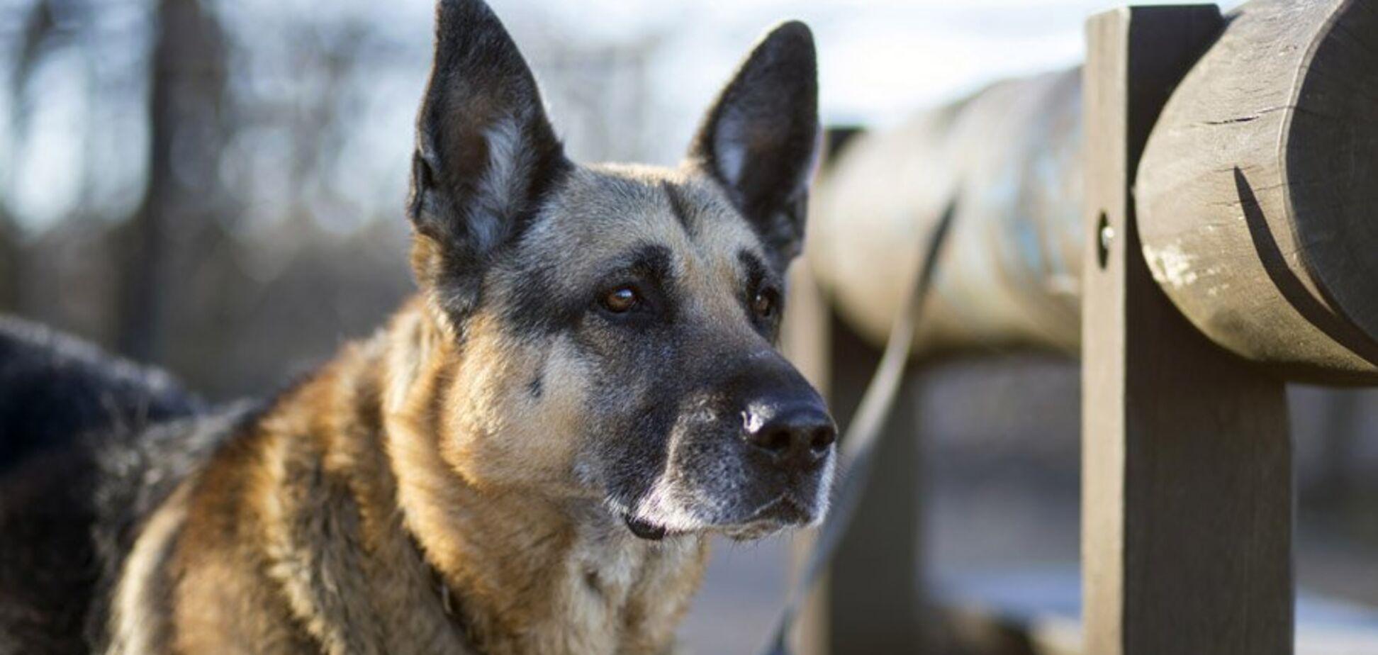 Жахливе вбивство собаки молотком: недородкові з Харкова винесли вирок