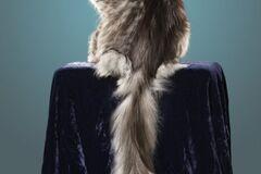 Кот из Книги рекордов Гиннеса