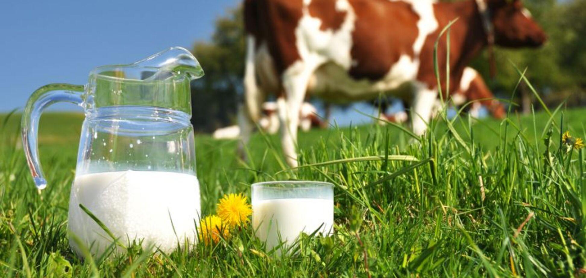 'Запрет' на торговлю домашней молочкой, говорите?