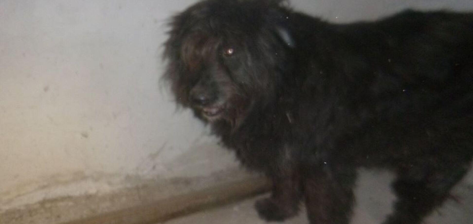 'Отметил год Собаки': киевский живодер шокировал сеть жестоким поступком