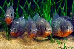 Украинцы – аквариумные рыбки? Известные люди высказались о 'тупой' нации