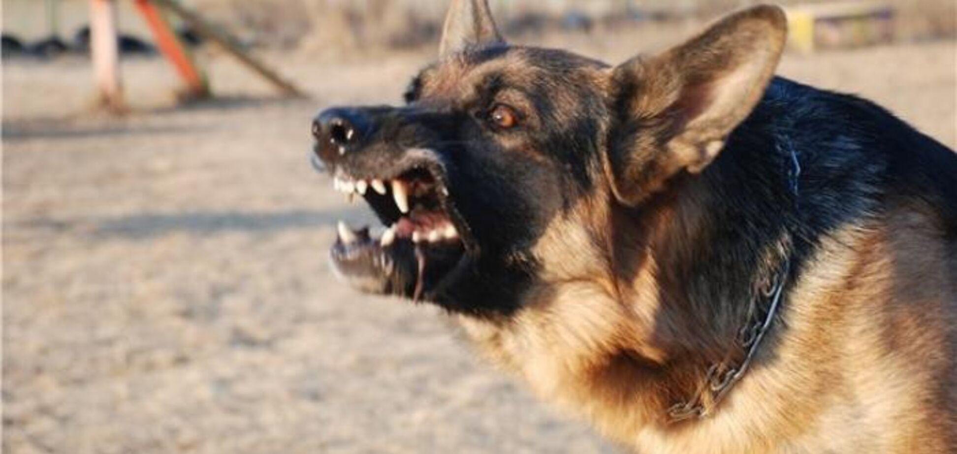 Собаки загрызли воина АТО: срок за жуткую трагедию получил пенсионер