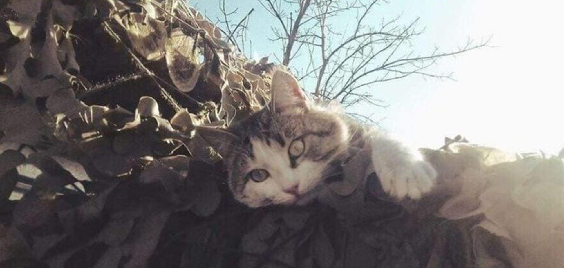 ''Братан, ты был настоящим'': украинцев растрогала история дружбы бойца АТО и кота