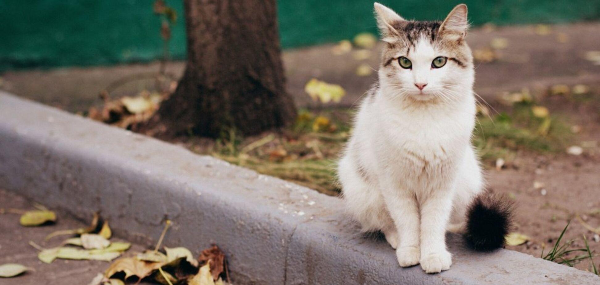 Харьковчане требуют признать котов частью экосистемы города