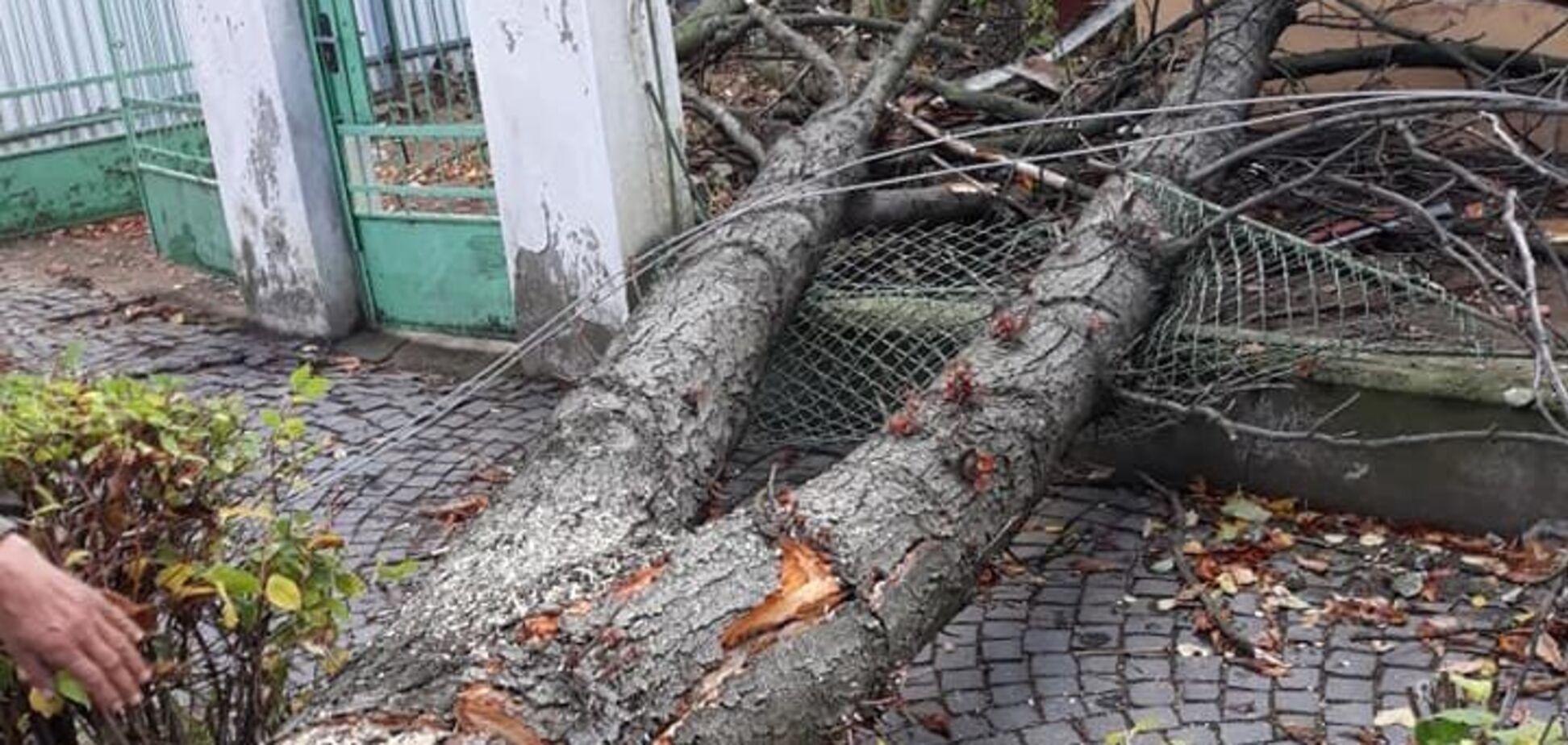 Ужгородом пронісся ураган: наслідки стихії