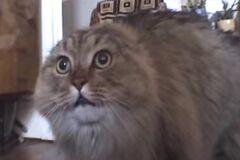 Пришлось усыпить: умер всемирно известный кот-звезда YouTube