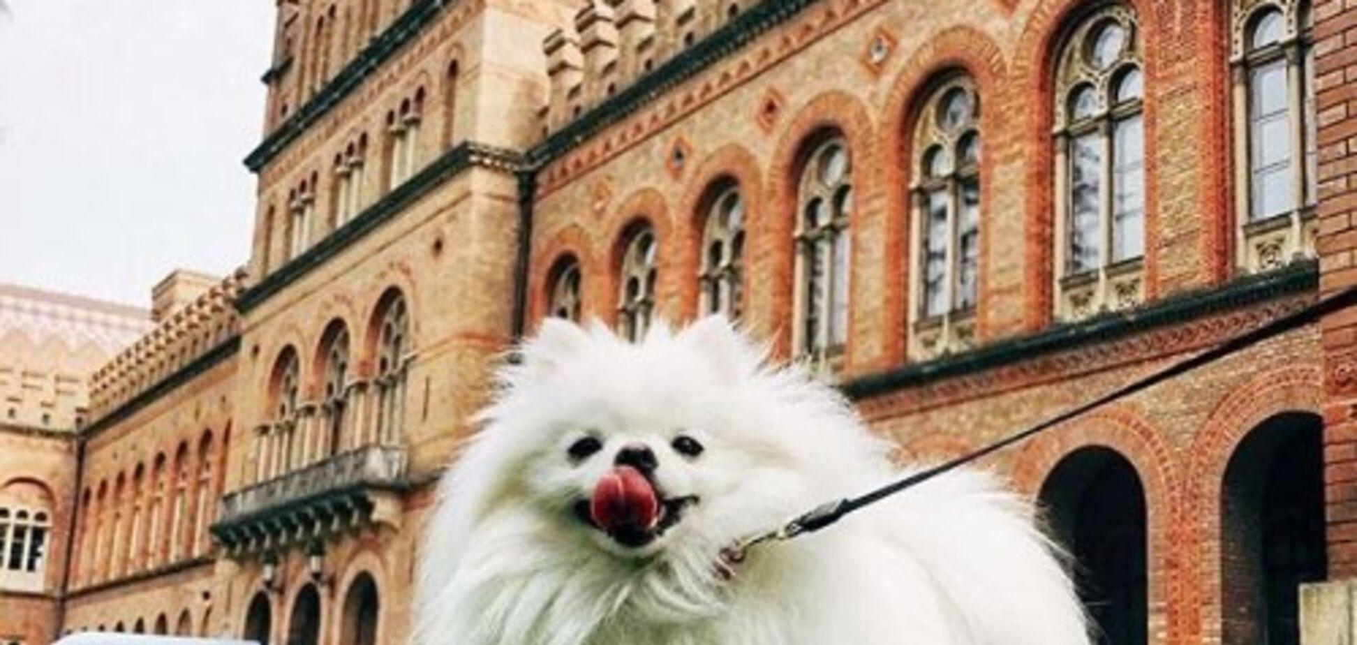 Осенние Черновцы: опубликованы красочные фото