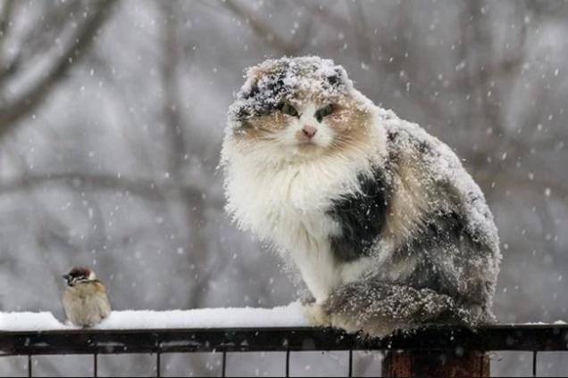 Украину засыплет снегом: появился прогноз погоды на новую неделю
