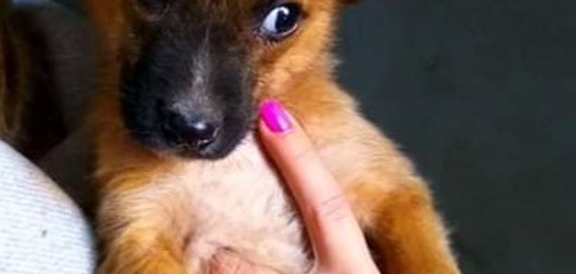 Друг безкоштовно: 4 собаки Дніпра, які шукають будинок