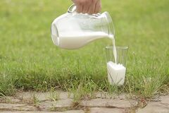 Как правильно выбрать в магазине молоко: товаровед дала совет