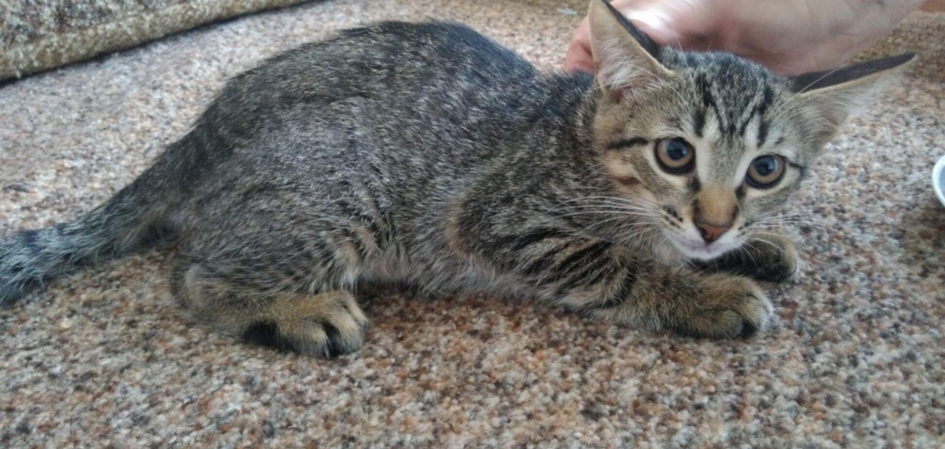 Друг бесплатно: 4 котика Днепра, которые ищут дом