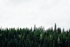 Продажа елок в Украине: эколог рассказал о вопиющей проблеме