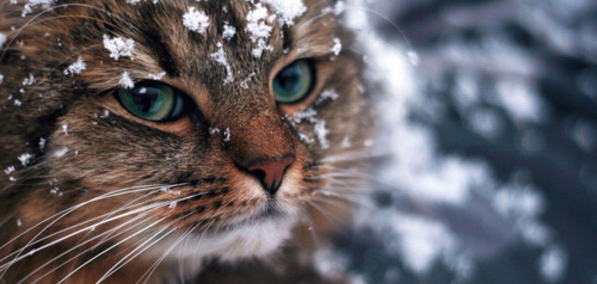 Погода на зиму в Україні: синоптик назвав дати найлютіших морозів