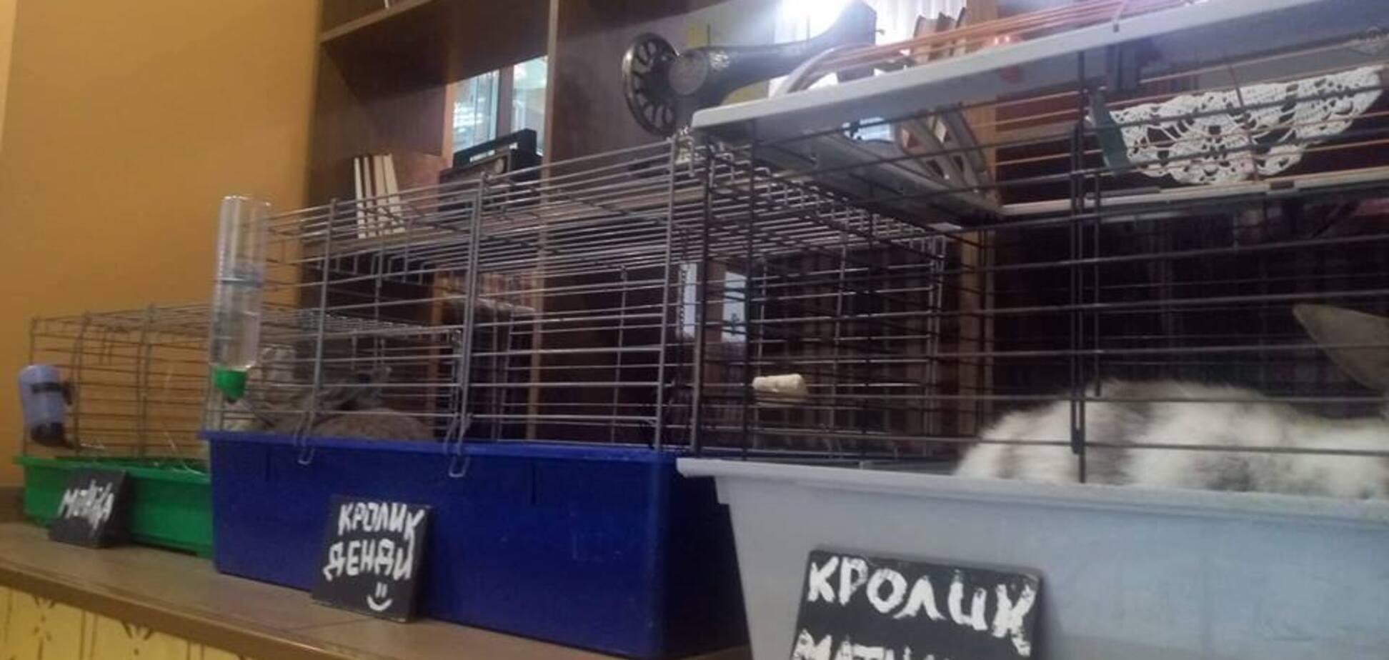 ''Средневековье'': популярное кафе в Киеве возмутило сеть жестоким обращением с животными