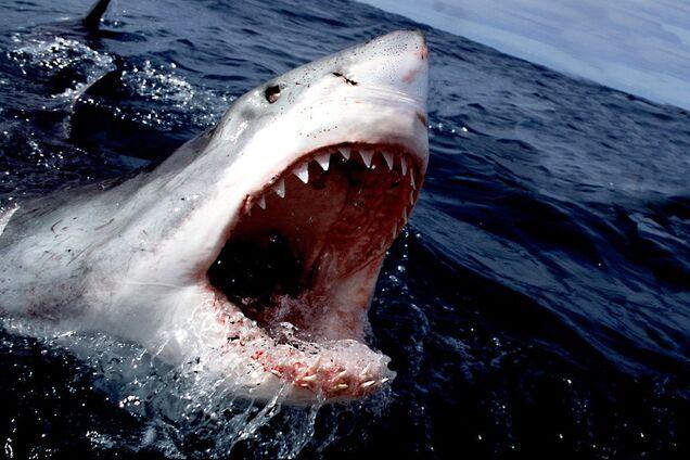 В Австралии акула атаковала туриста на виду у отдыхающих: мужчина не выжил